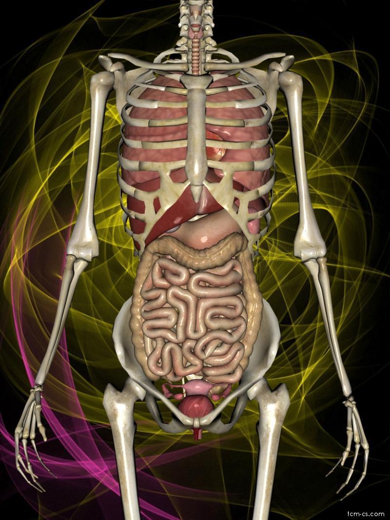 Šankhaprakšálana Várisara - vnitřní orgány