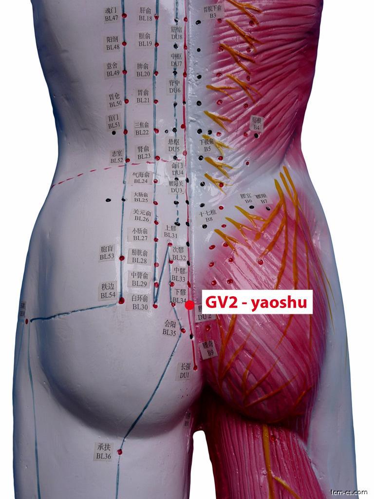 GV02 - jao-šu (Yaoshu)