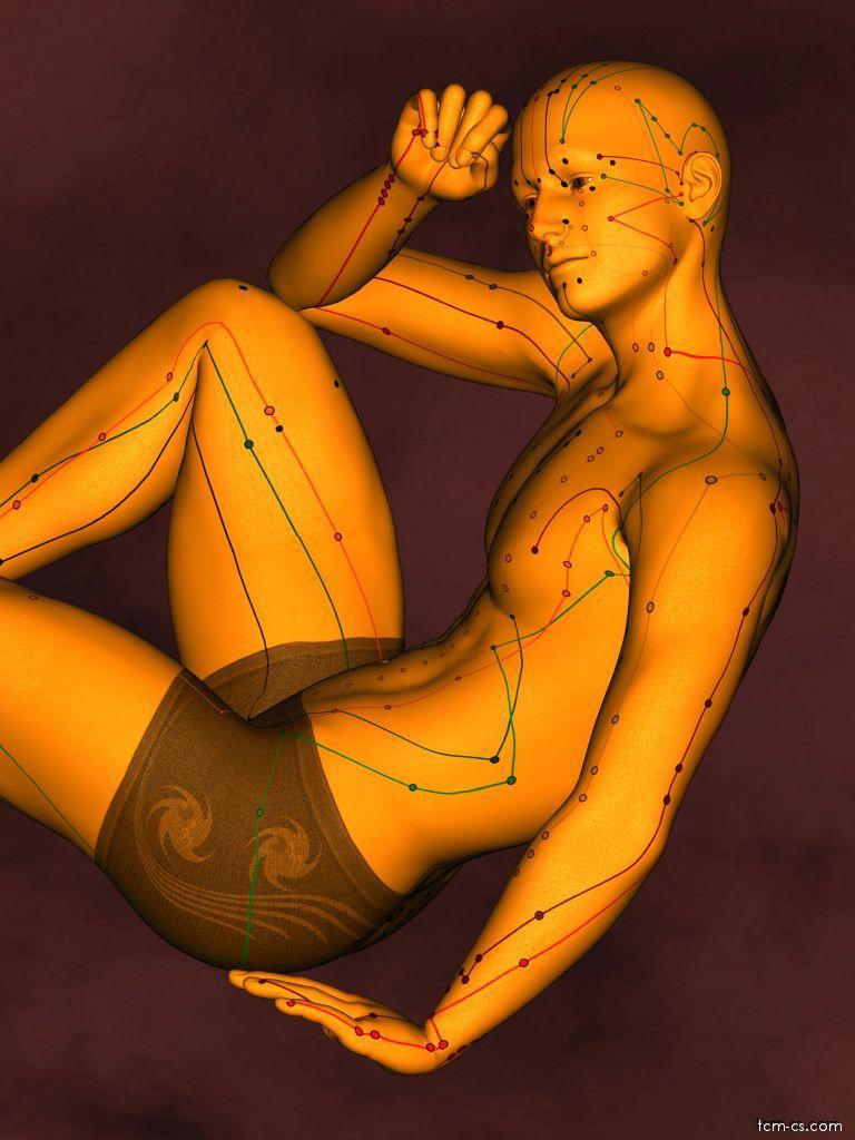 Akupunkturní model