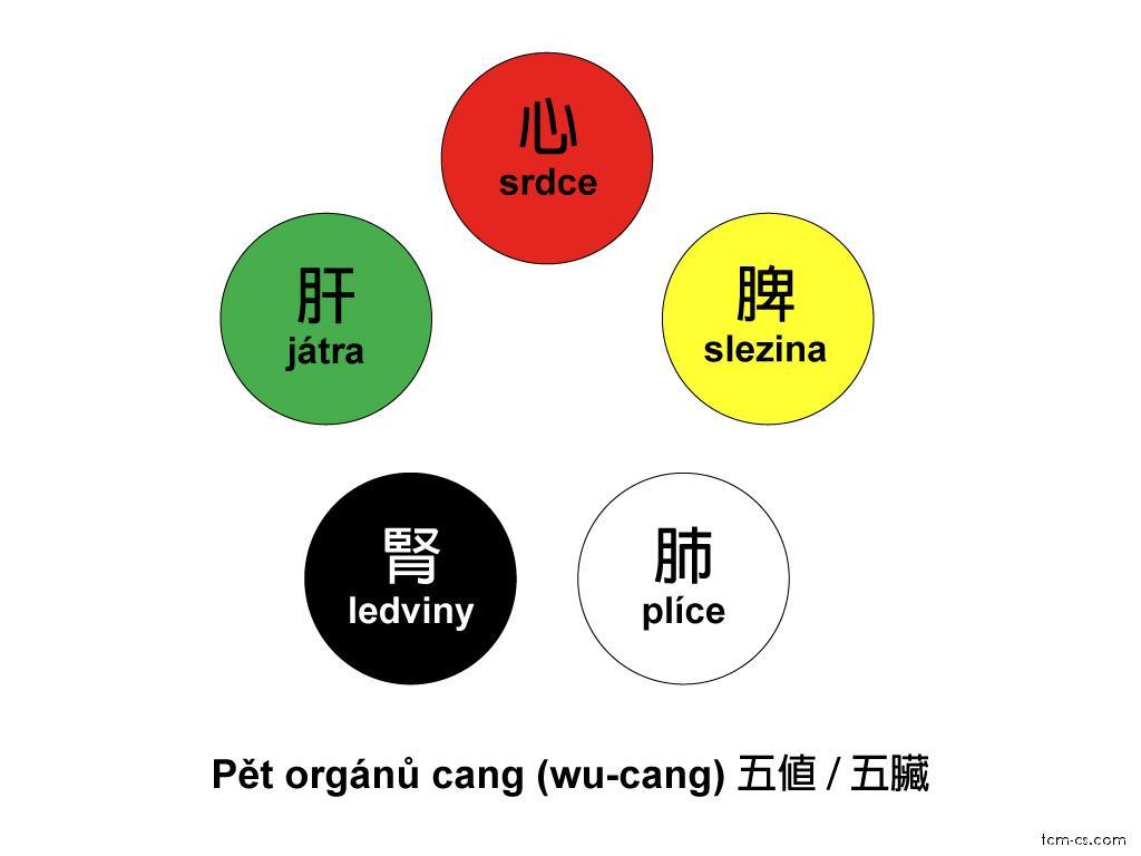 Pět orgánů cang (Wuzang)