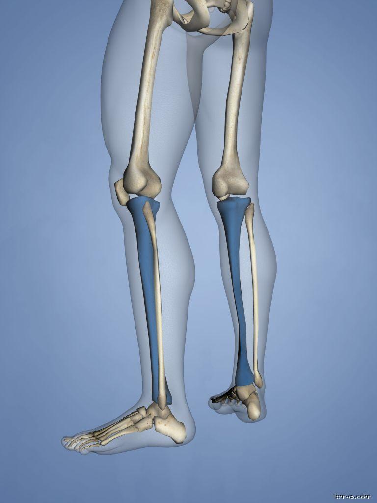 Tibia - holenní kost