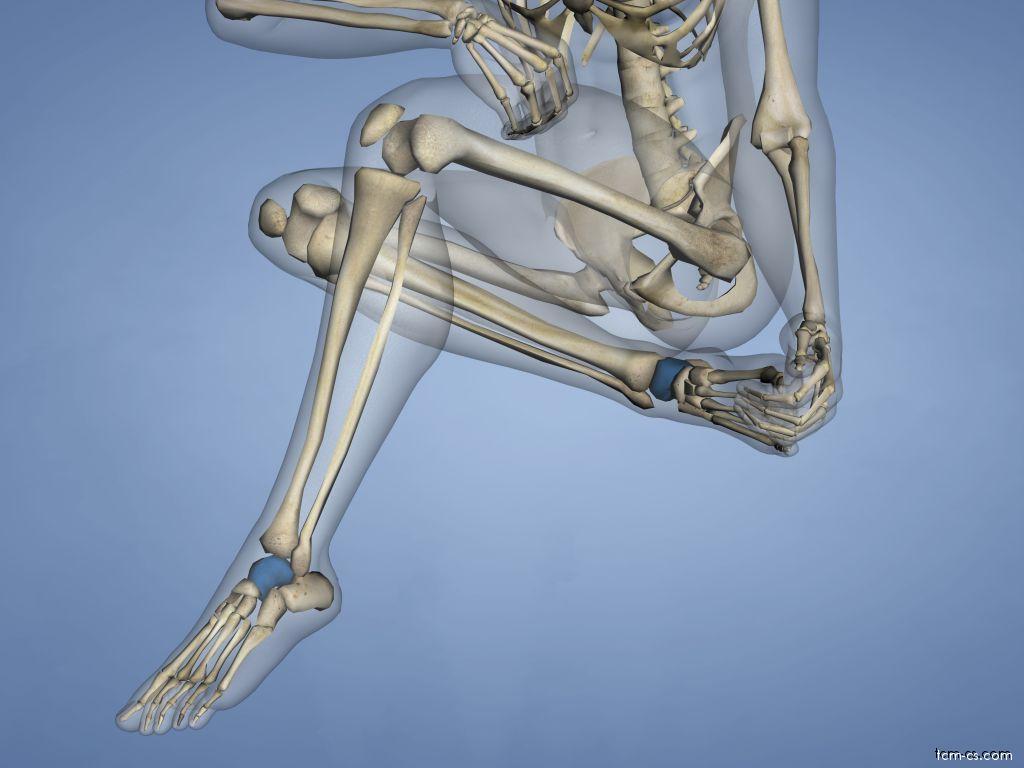 Talus - hlezenní kost
