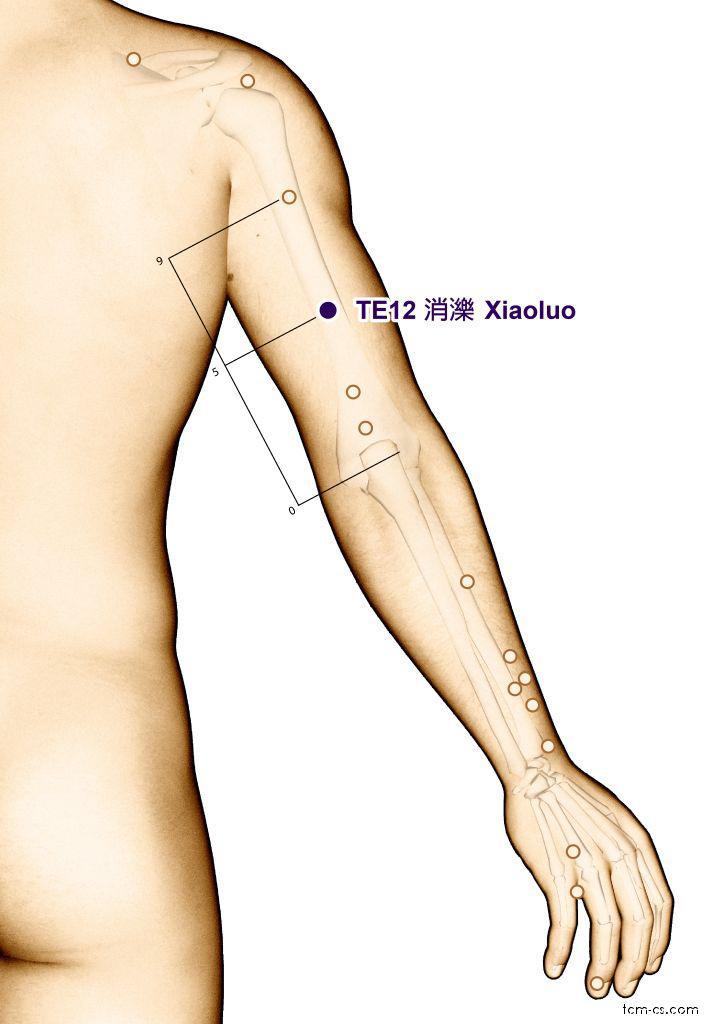 TE12 - siao-luo (Xiaoluo)