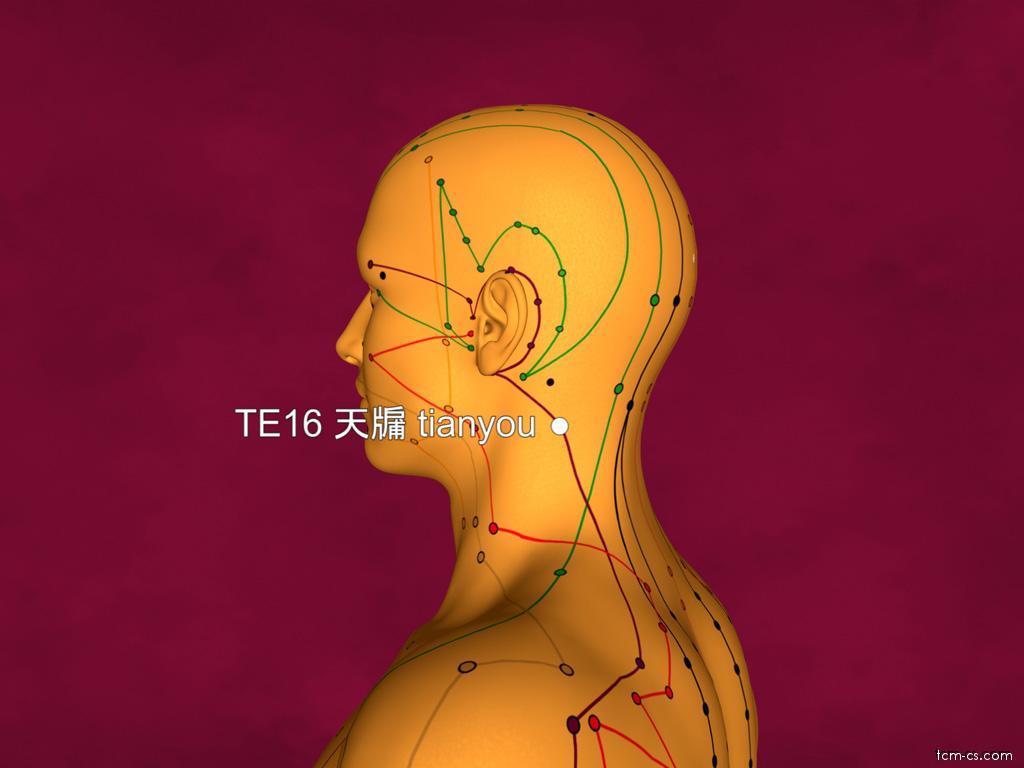 TE16 - tchien-jou (Tianyou)