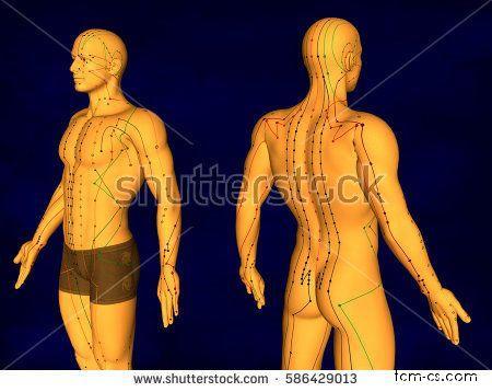 Akupunkturní model - ukázka obrázku