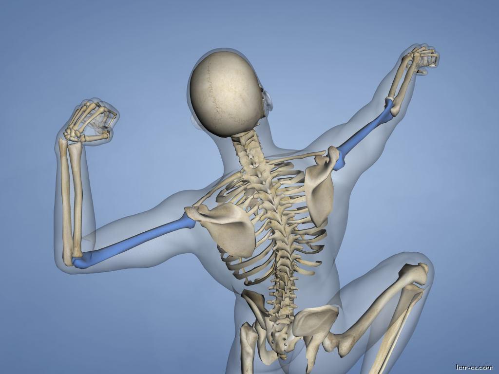 Pažní kost