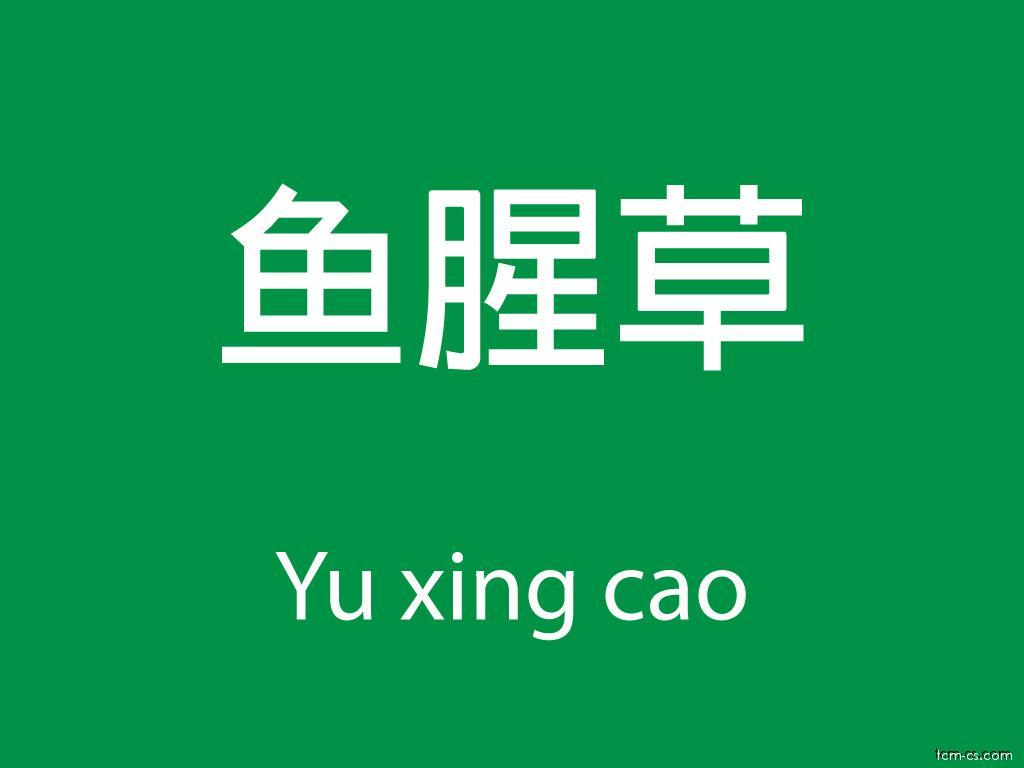 Čínské byliny (Yu xing cao)